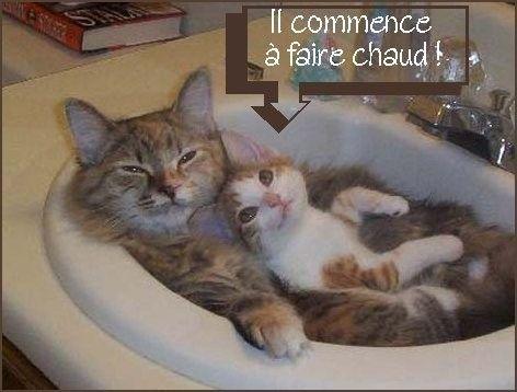 Chat marrant - Chaton marrant ...