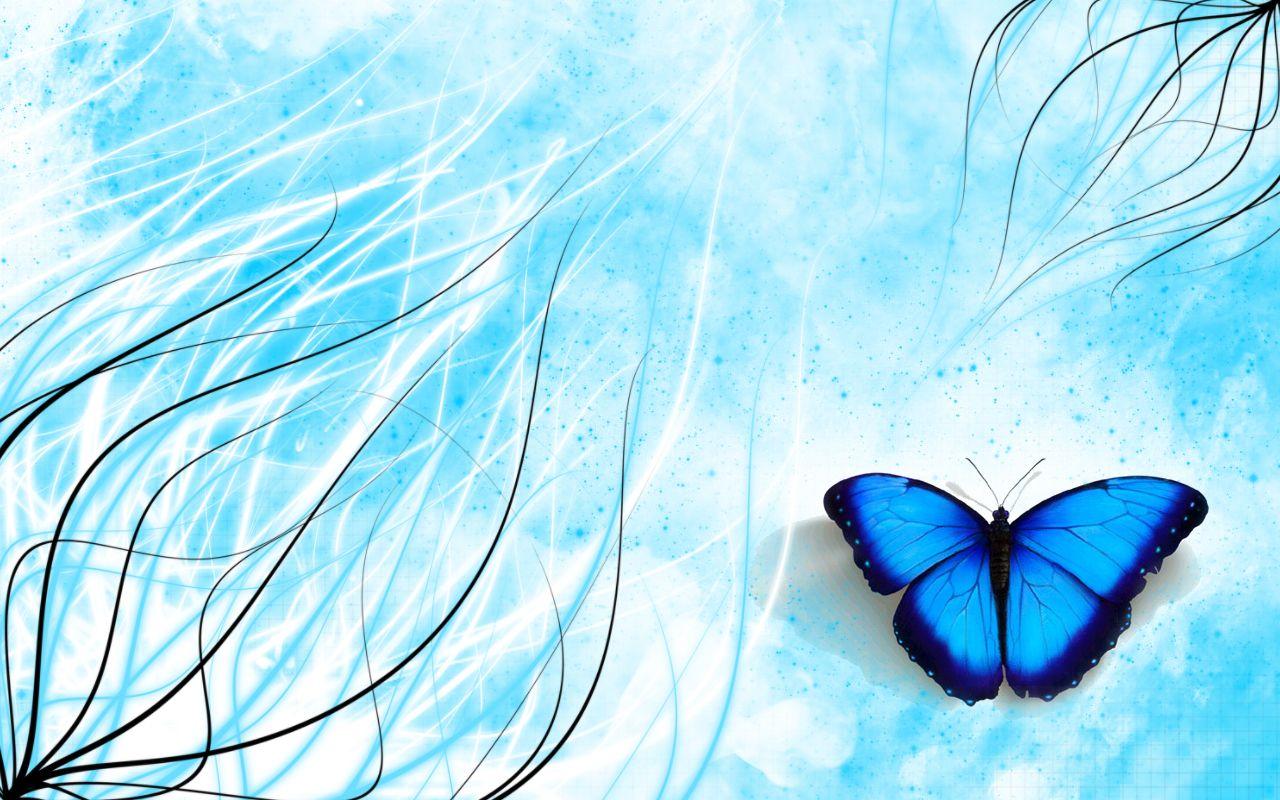 Fond d 39 ecran - Image papillon gratuit ...